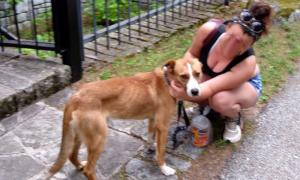 cane trovato antrona
